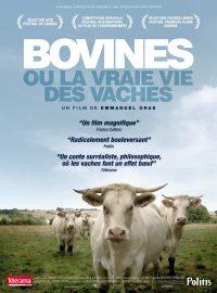 Bovines, ou la vraie vie des vaches